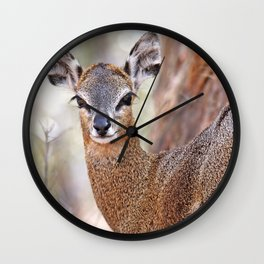 Klipspringer, Africa wildlife Wall Clock