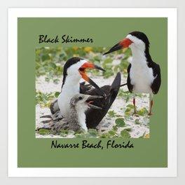 Black Skimmer Art Print
