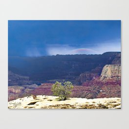 Little Tree of The Grand Canyon Canvas Print