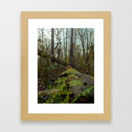 Woods walk Framed Art Print