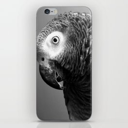Curiosity Of Bo - African Grey Parrot Photography Animals iPhone Skin
