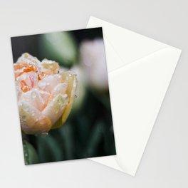 Returning Spring Stationery Cards
