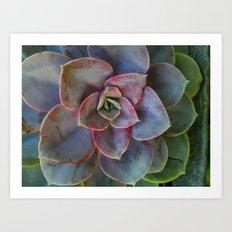 Plant Geometry Art Print