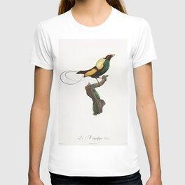 Magnificent bird of paradise from Histoire Naturelle des Oiseaux de Paradis et Des Rolliers (1806) b T-shirt