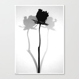 Rose - Shadow Canvas Print