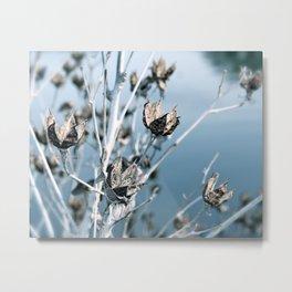 Winter Seed Pods Metal Print