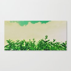 Hedge Row Canvas Print