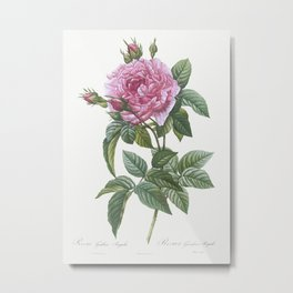 Gallic Rose, Rosa gallica regalis from Les Roses (1817–1824) by Pierre-Joseph Redouté. Metal Print