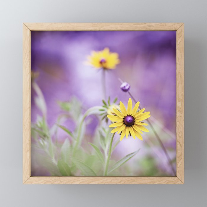 Purple Yellow Flower Photography, Purple Gold Green Nature Art Print, Daisy Floral Photo Framed Mini Art Print