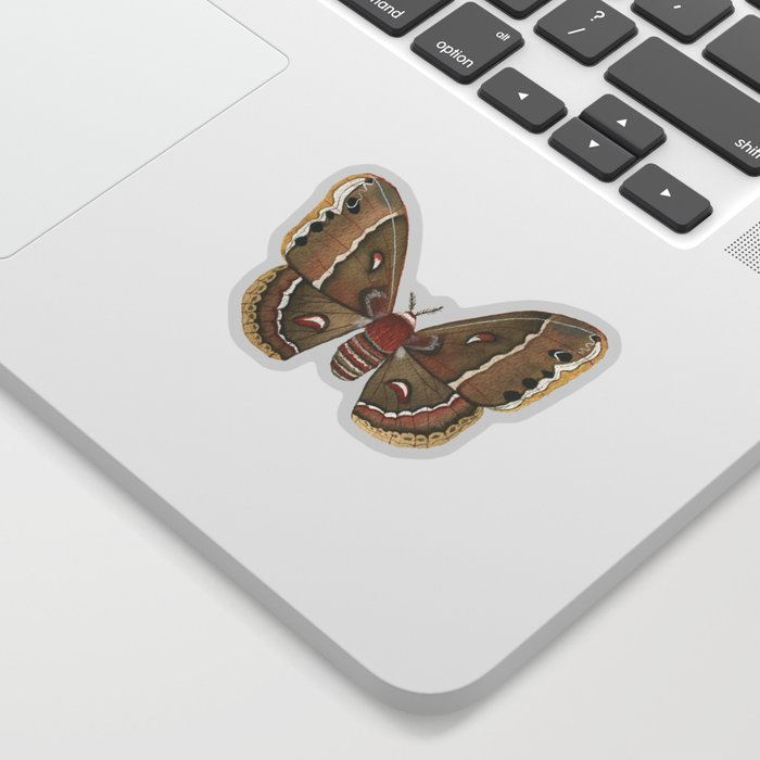 Watercolor Cecropia Moth Sticker