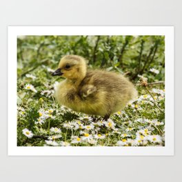 Fluffy Gosling Art Print