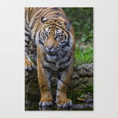 My Water  Canvas Print