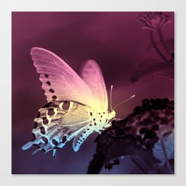 Swallowtail Gradient Canvas Print