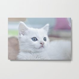 Cat by Hike Shaw Metal Print