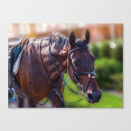 Horse Wall Art, Horse Portrait. Horse looking straight forward closeup. Canvas Print