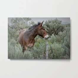 Mule in Wyoming Metal Print