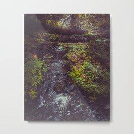 Stream at Little Pond Metal Print