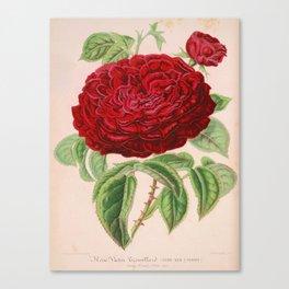Rose Victor Trouillard Vintage Botanical Floral Flower Plant Scientific Canvas Print