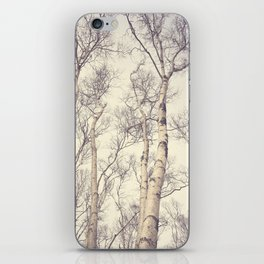 Winter Birch Trees iPhone Skin