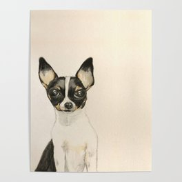 Chihuahua - the tiny dog Poster