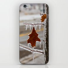 Frozen Red Leaf iPhone & iPod Skin