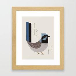Superb Fairywren, Bird of Australia Framed Art Print