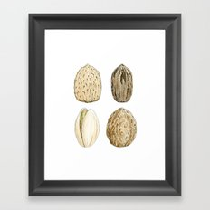 Edible Nuts Framed Art Print
