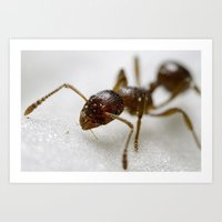 Extreme Macro Ant on a Clematis petal Art Print