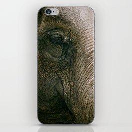Elephant Face iPhone Skin