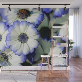 White and Blue Daisy Close up Wall Mural