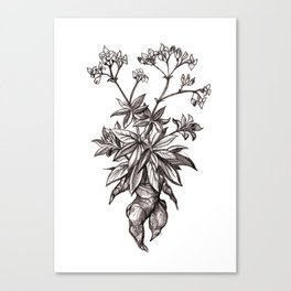 Mandragora Officinalis Canvas Print