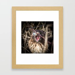 A Red-Tailed Hawk Eating a Rodent With Blinking Blue and Brown Eyes Framed Art Print