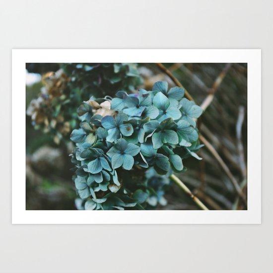 Winter Hydrangea Art Print