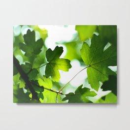 Green Maple Leaves Metal Print