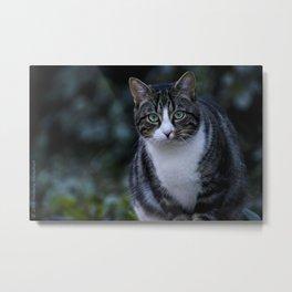 Green eyes cat Metal Print