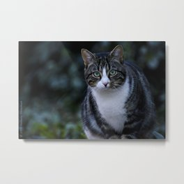 Green eyes cat Metal Print