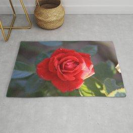 Soft Rose Rug