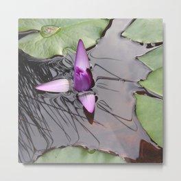 Lotus Emerging by Mandy Ramsey Haines Alaska Metal Print