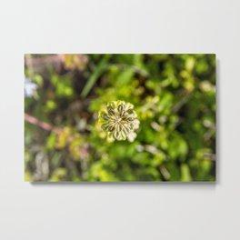 Perfect Balance in Plants Metal Print