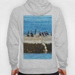 Cormorants Basking on The Big Rock Hoody