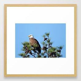 The Eagle at Walker County Lake  Framed Art Print