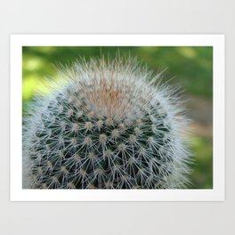 Cactus Cynara Cardunculus Art Print