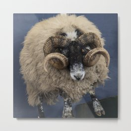 Dougal the Dancing Sheep Metal Print