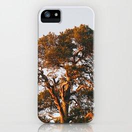 Half Tree iPhone Case