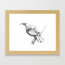 New Zealand Tui Framed Art Print