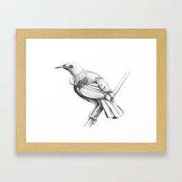 New Zealand Tui Framed Art Print