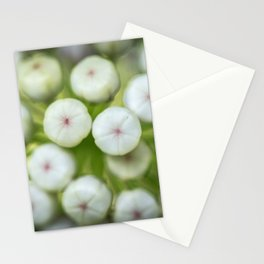 Wht-flowered Milkweed Stationery Cards