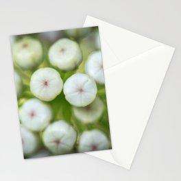 Wht-flowered Milkweed Stationery Cards