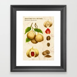 Anatomy of a Nutmeg Framed Art Print