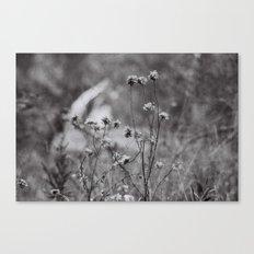 Wilting Flowers Canvas Print